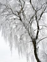 winter-343565_960_720