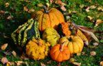 pumpkins-1712841_1920